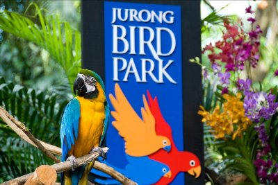 Birthday Special Free Admission to Jurong Bird Park Singapore